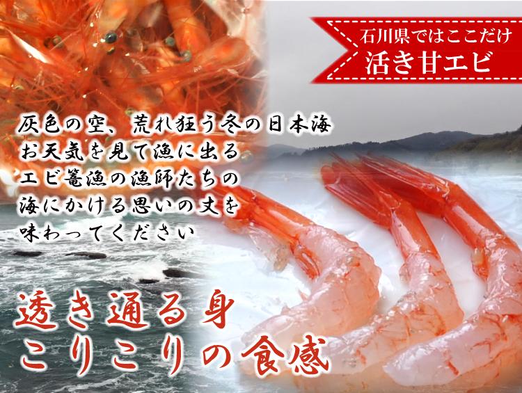 活き甘エビは石川県の西海漁協からお届け