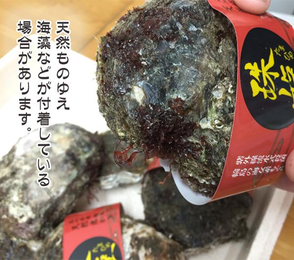 天然岩牡蠣ゆえ